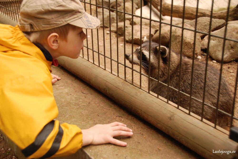 Laste-jooga-looma-ja-looduslaager03.jpg